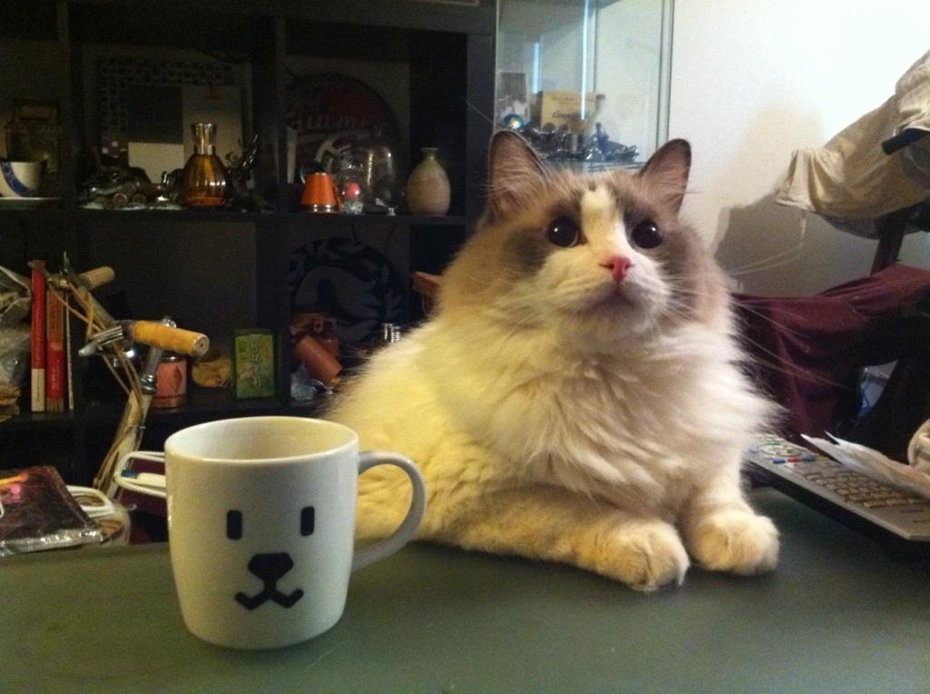 もふニングコーヒーお代わり