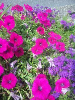 夏・花盛り