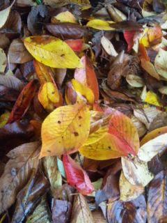 寒そうな紅葉