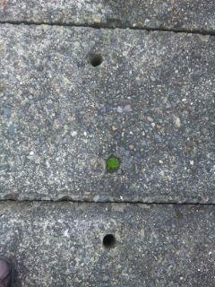 ミニマム苔庭