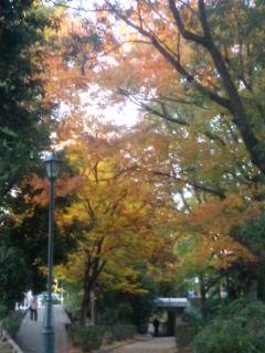紅葉と花時計