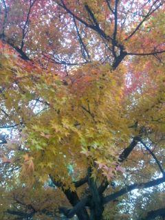 今朝の紅葉
