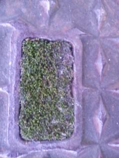 マンホールのフタ苔庭