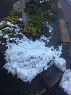 雪残る花壇