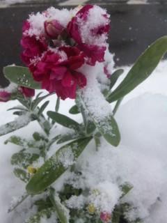 再び雪の花壇
