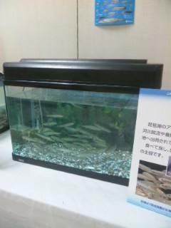 琵琶湖水産まつり