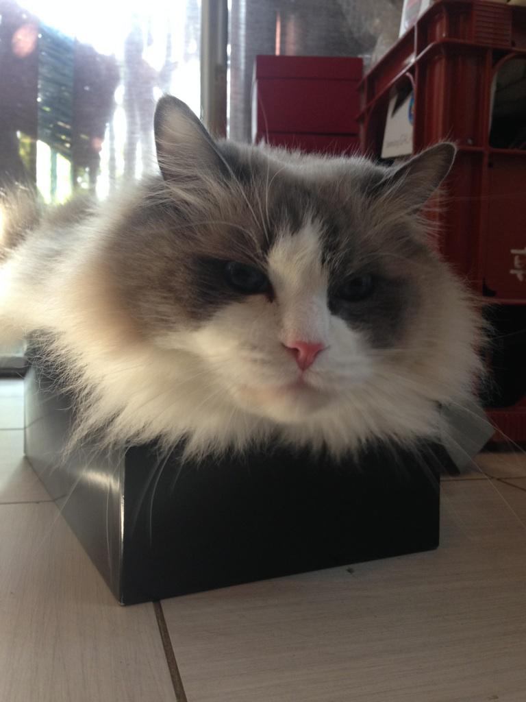 箱が好き!