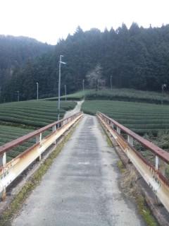 川岸の茶畑