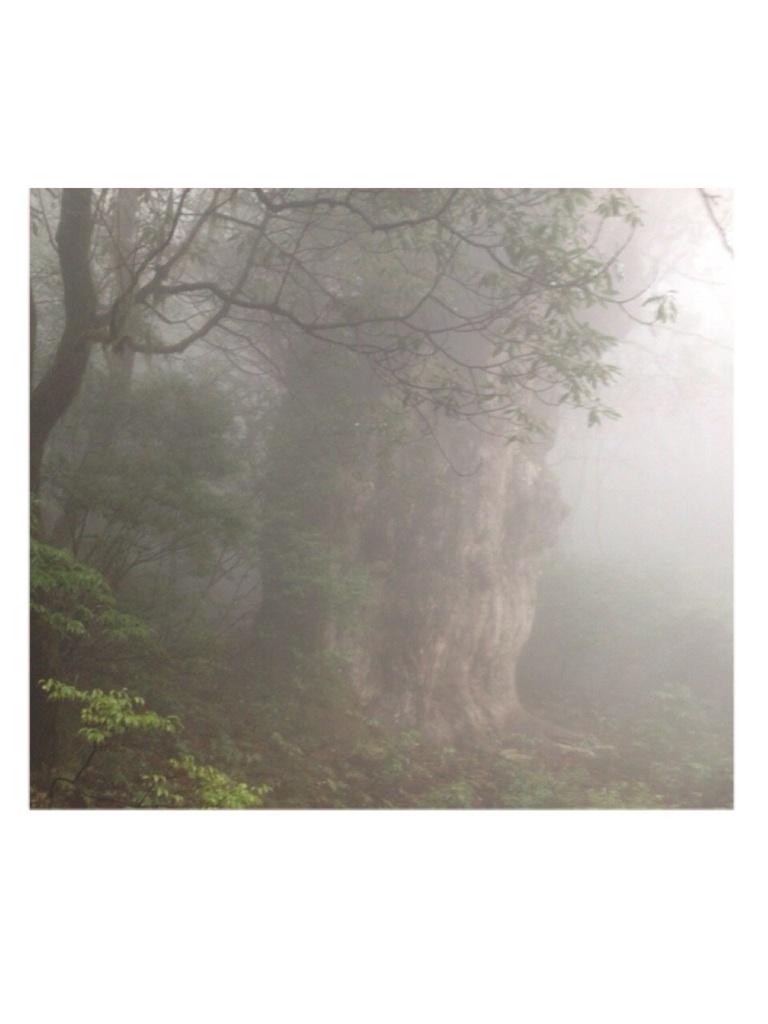縄文杉キューピー