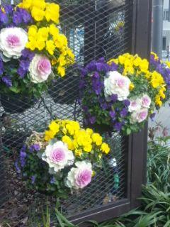花壇にも春