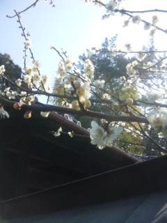 苺と梅の花