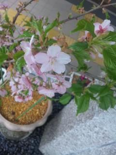 花壇の花いろいろ