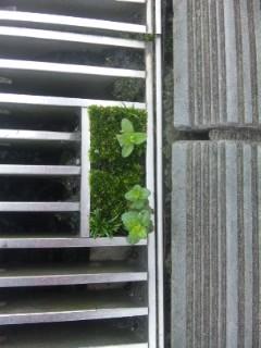 久々にミニマム苔庭