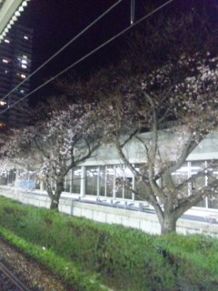 夕べの大津駅からの桜