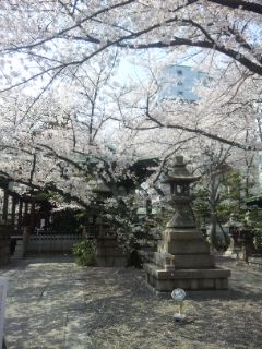 散り初め桜