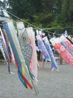 鯉のぼりの季節