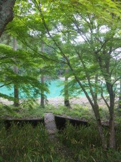 初夏の里山