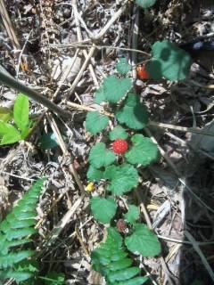 里山の植物