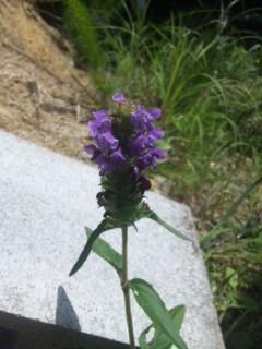 里山の植物 その2