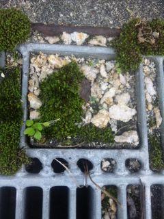 大津港のミニマム苔庭