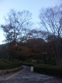 滋賀県立近代美術館「遊亀とゆき彦」