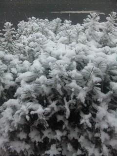 吹雪いてました