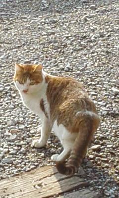 多賀門前町その2 猫