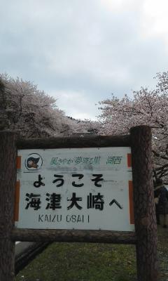 望桜亭で春満喫