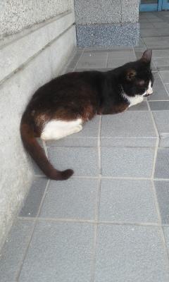 金曜日の玄関猫