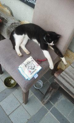 月曜日の猫