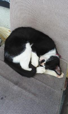 木曜日の猫