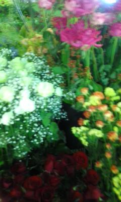 大阪駅の花畑