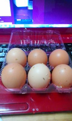 楽農園で卵拾い体験