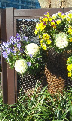 春の花見つけた