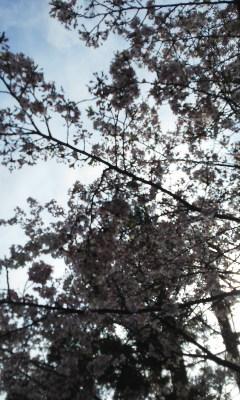 花にごり「桜美酒」