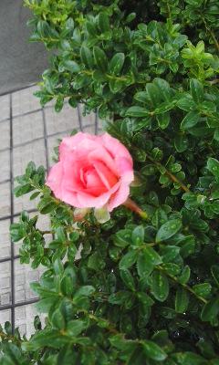雨上がりの琵琶湖