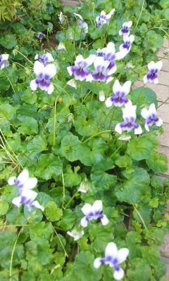 季節不明の花