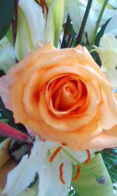 今日のバラとか