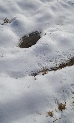 小鳥の足跡