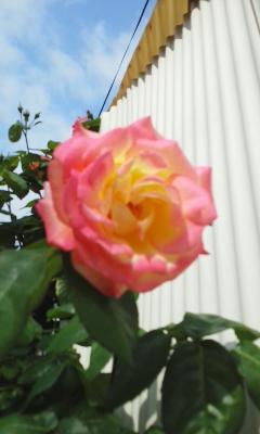 電気羊は「君はバラより美しい」を歌うか?