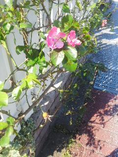 秋の花とカウントダウン