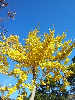 秋晴れと紅葉黄葉