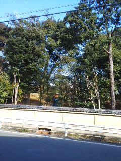 京都北山の森林保全活動の現場へ