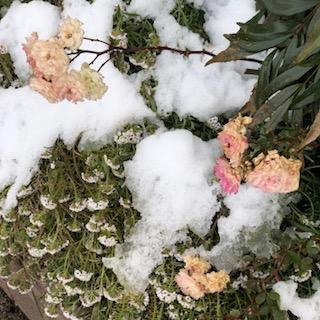 霜と雪の朝