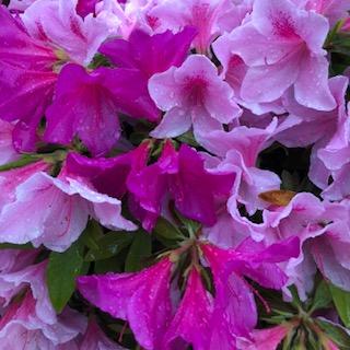 花盛りの季節考えていることなど