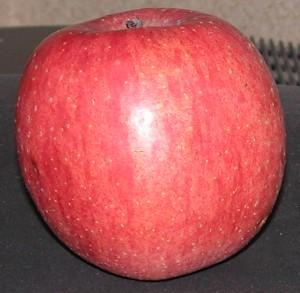 2005-12-30-ringo