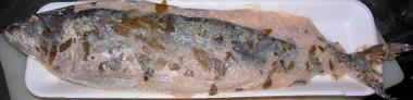 2007527saba1
