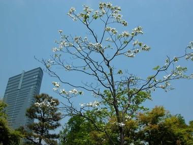 200753hanamizuki1