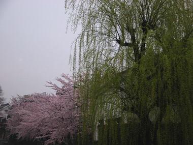 200847ha5yanagi