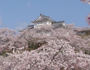 Tsuyamajyoharu2